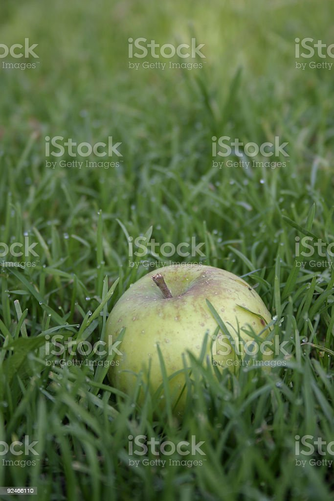 apple from the tree royalty-free stock photo