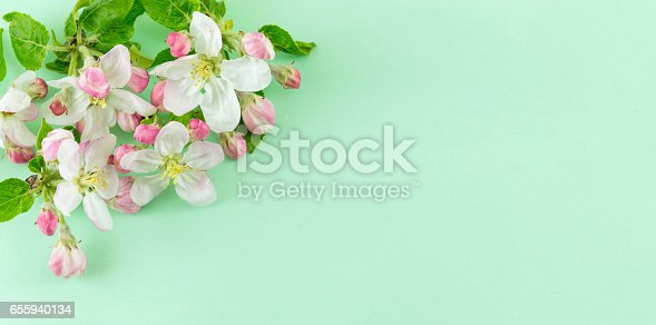 istock Apple fruit blossom flower with leaves 655940134