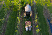 Two female farmers sitting on trailer full of apples between rows of apple trees, aerial view.