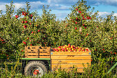 Full apple crates behind a tractor