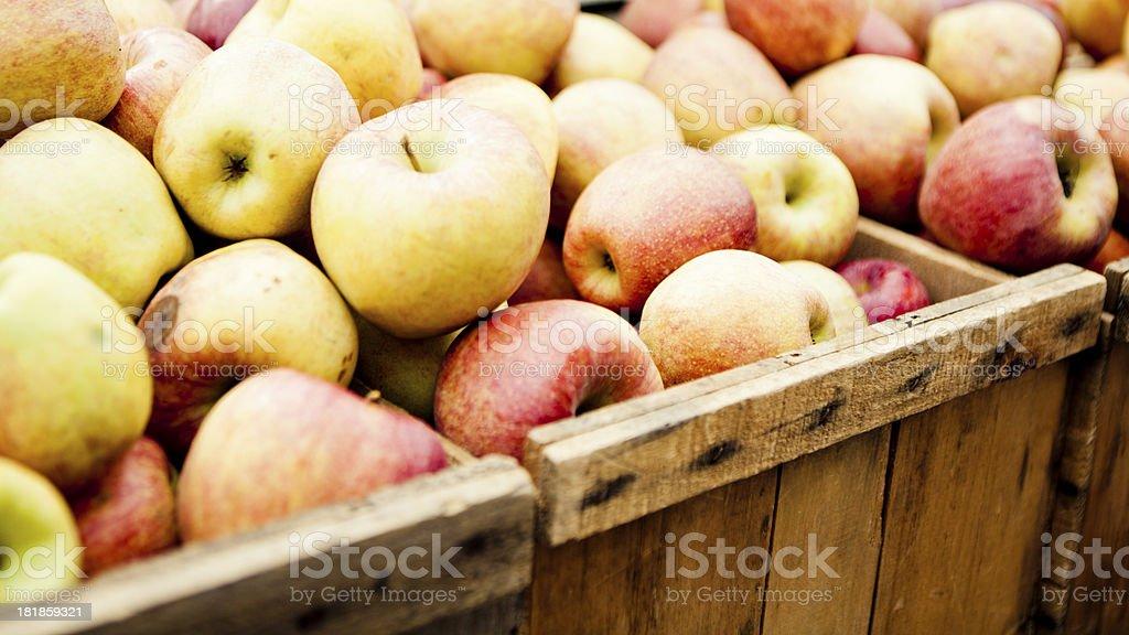 Apple Harvest royalty-free stock photo