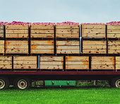 Apple harvesting in Nova Scotia's Annapolis Valley.