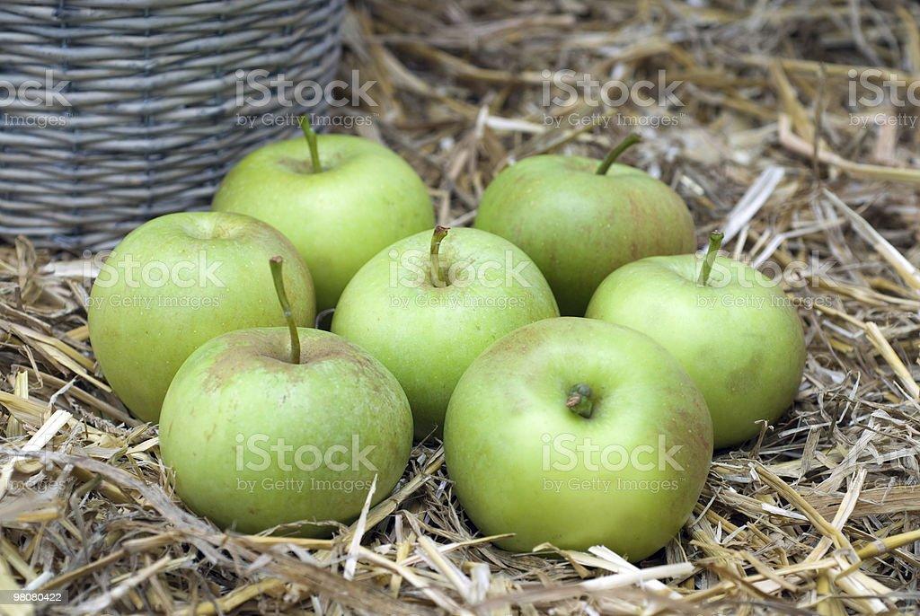 Apple vendemmia foto stock royalty-free