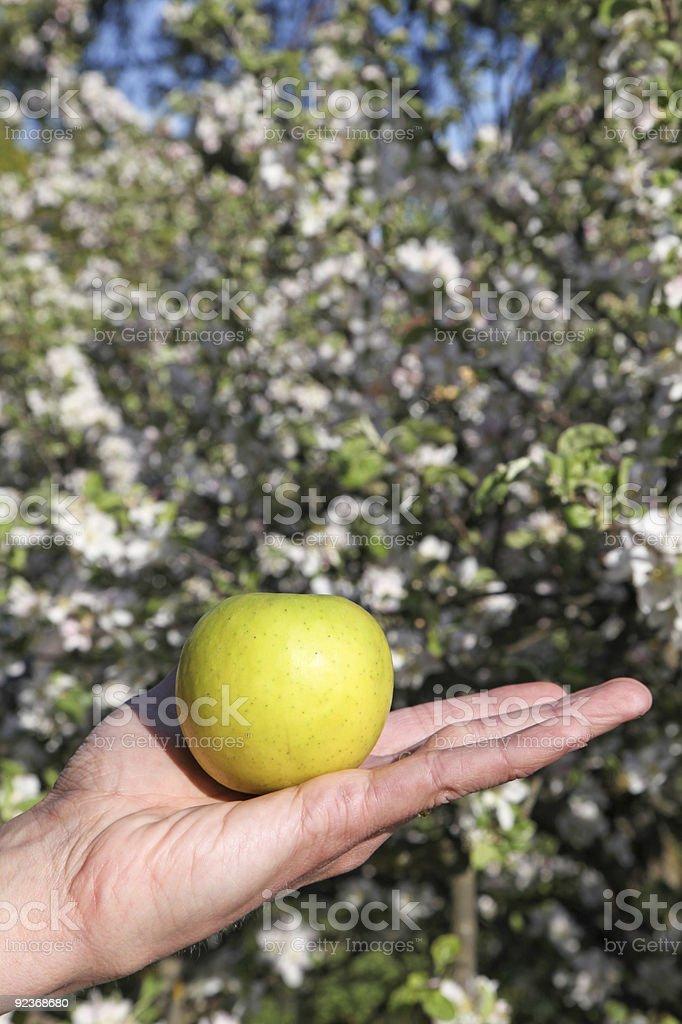 Apfel in der hand mit Blüte Hintergrund Lizenzfreies stock-foto