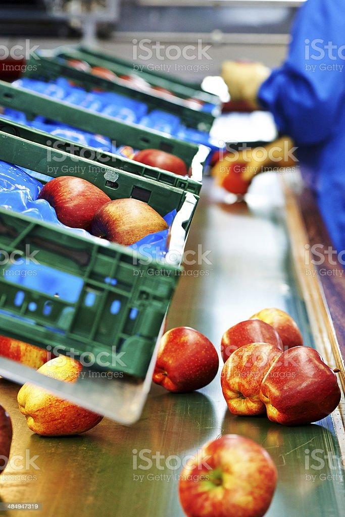 Apple industry stock photo