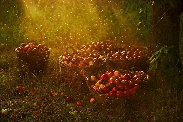 apple magic stock photo