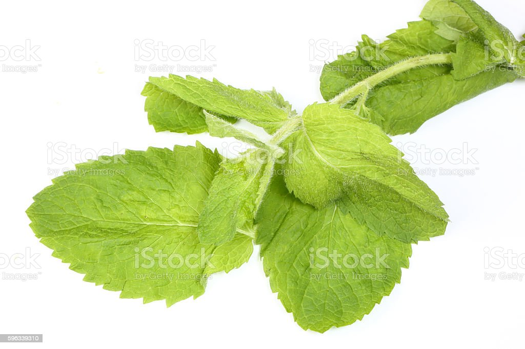 Apple mint green herb Lizenzfreies stock-foto