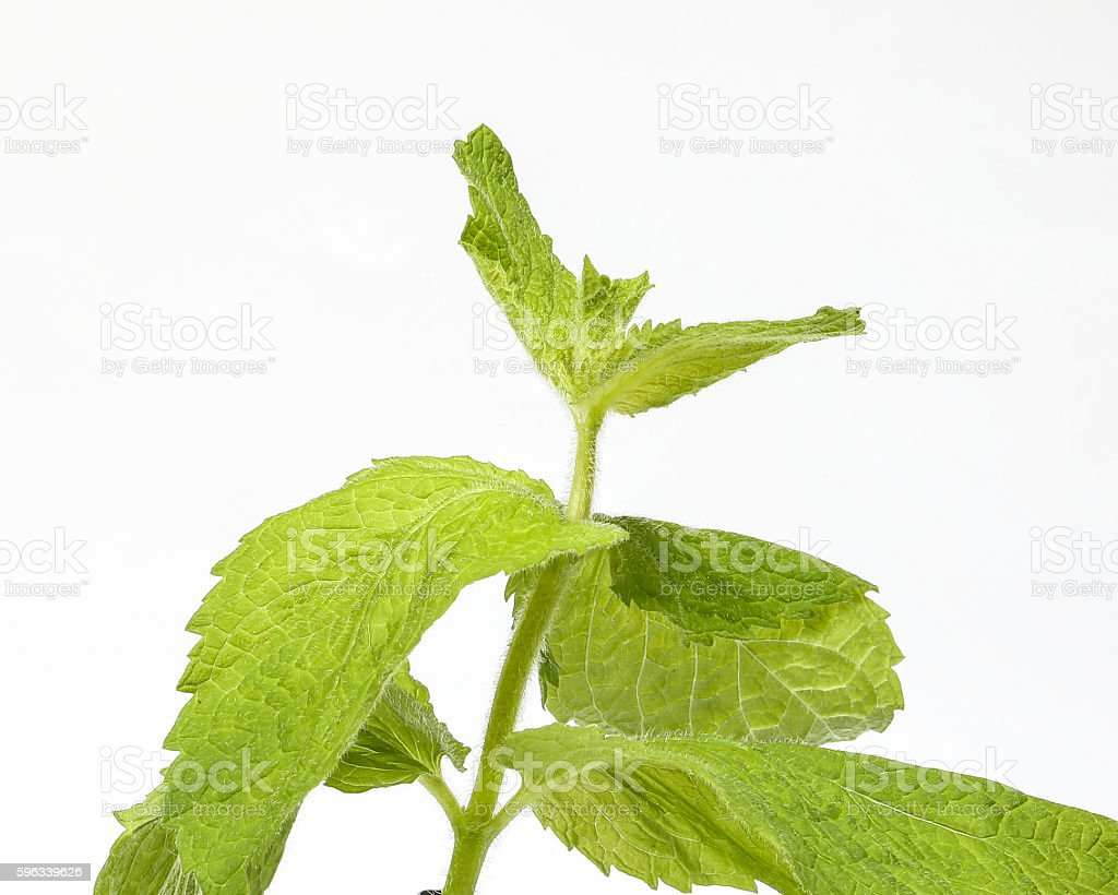 Apple mint green herb royalty-free stock photo