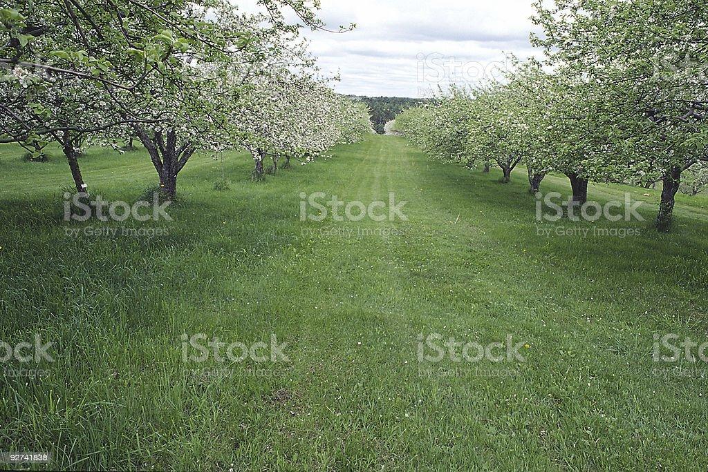 Apfelgarten 3 Lizenzfreies stock-foto