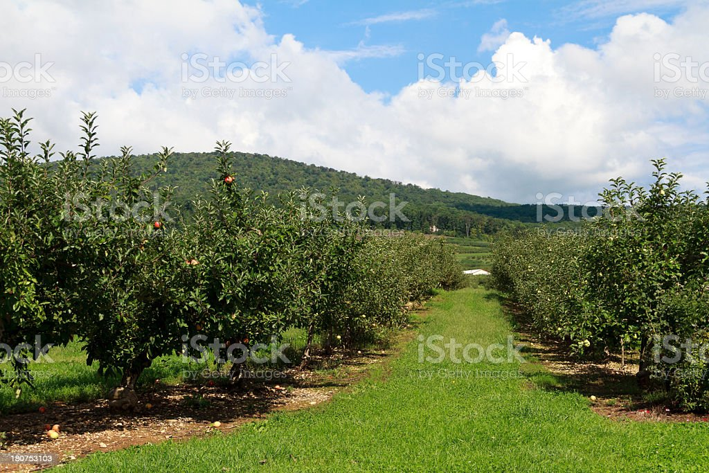 Apple Orchard and Cloud Filled Sky royalty-free stock photo