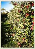 Fruit, Leaf, Nature, Agriculture, Ripe