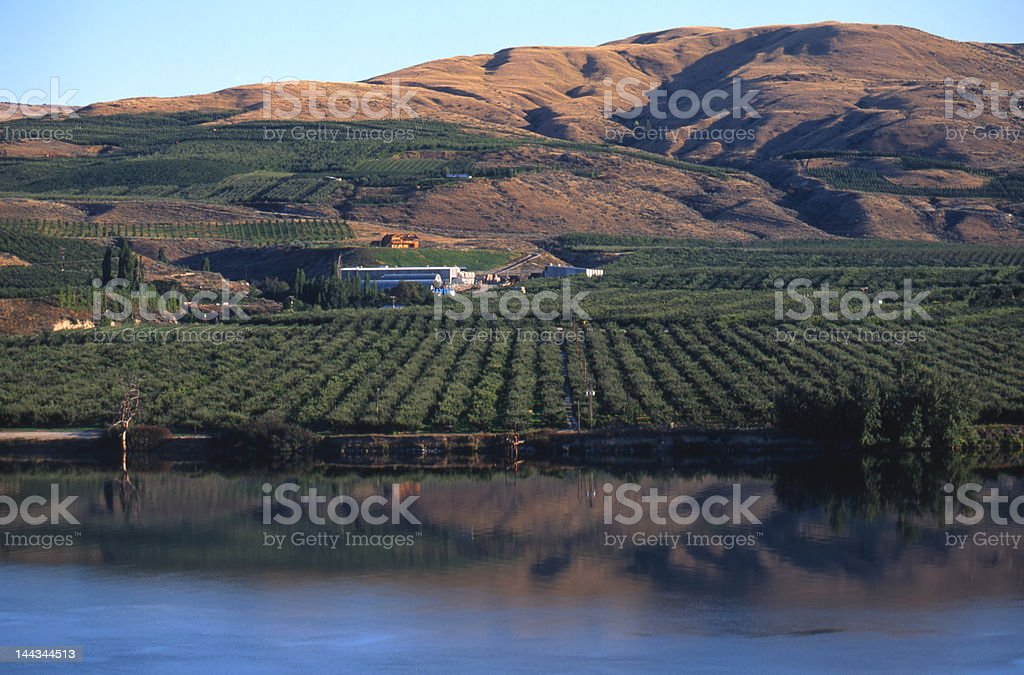 Apple Orchard on Okanagon River stock photo