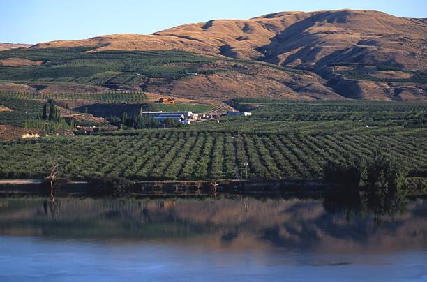Apple Orchard on Okanagon River stock photo