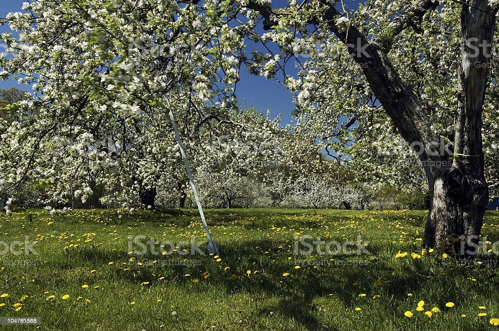 Apple Orchard Prop royalty-free stock photo