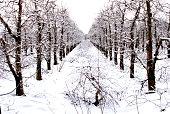 frozen snow on an apple bud in winter, image