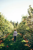 Young girl walking through apple orchard