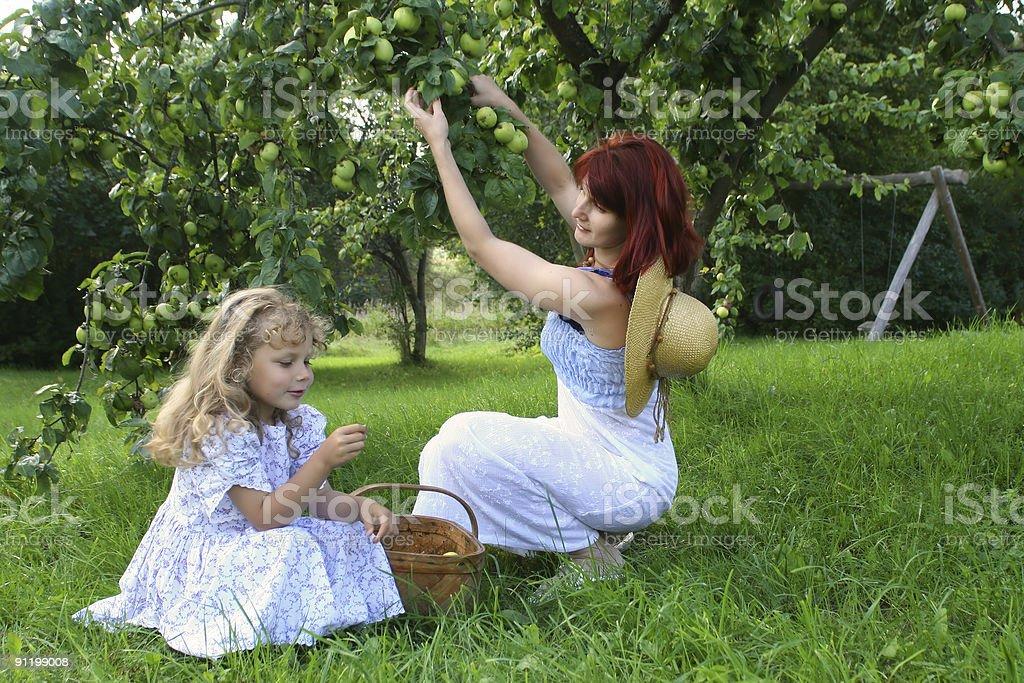 Apple Picking royalty-free stock photo