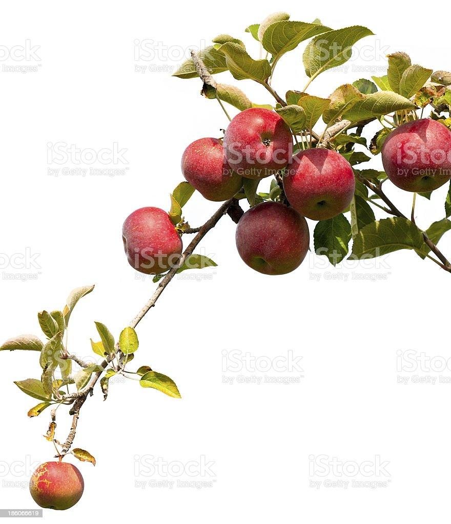 Apple – Foto
