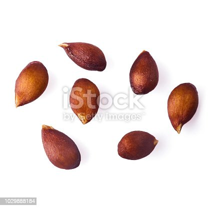 Apple seeds isolated over white background,