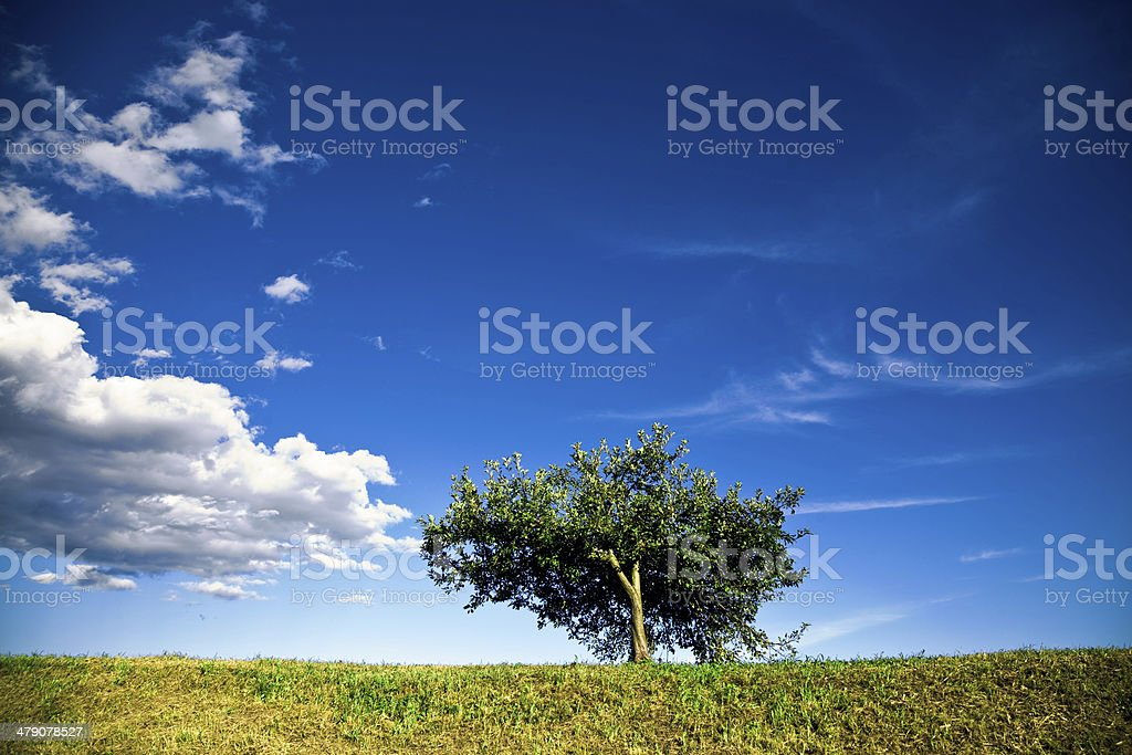 Apple tree against summer sky royalty-free stock photo