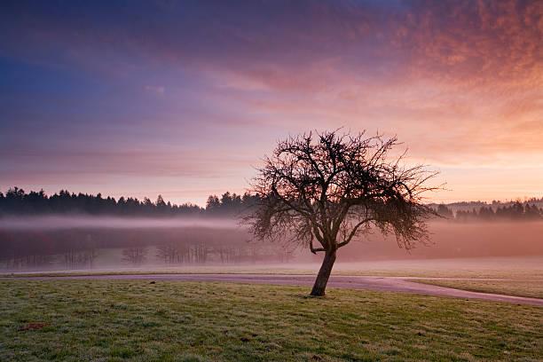 Apple Tree at Sunrise Near Water stock photo