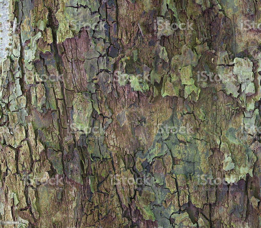 apple tree bark royalty-free stock photo