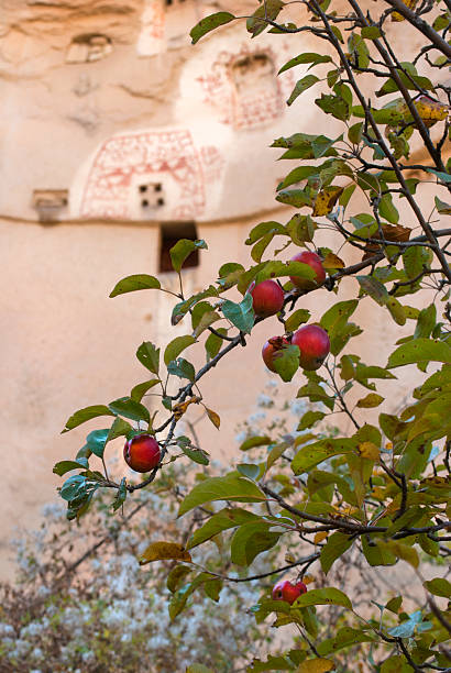Apple tree, blossoms and limestone carvings in Cappadocia, Turkey stock photo
