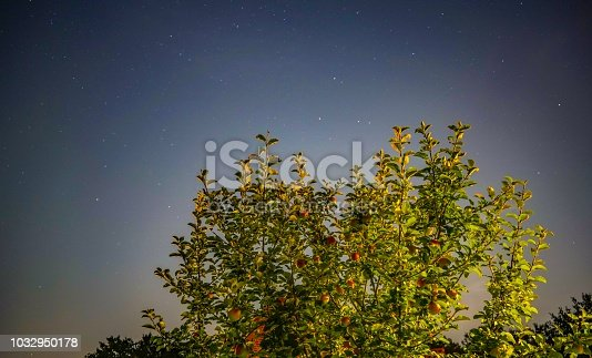 istock Apple tree in a sky full of stars 1032950178