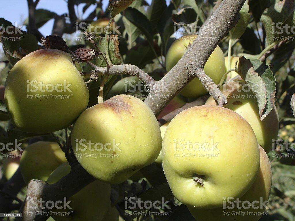 사과나무 트리 royalty-free 스톡 사진