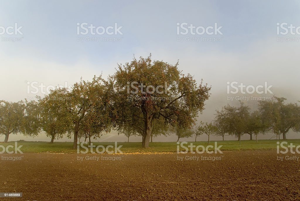 apple trees in autumn royalty-free stock photo