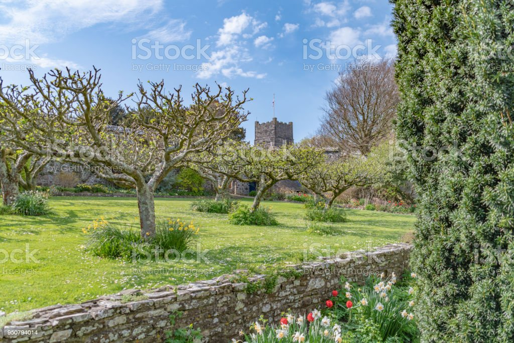 Apple trees in front of church in Clovelly in Devon stock photo