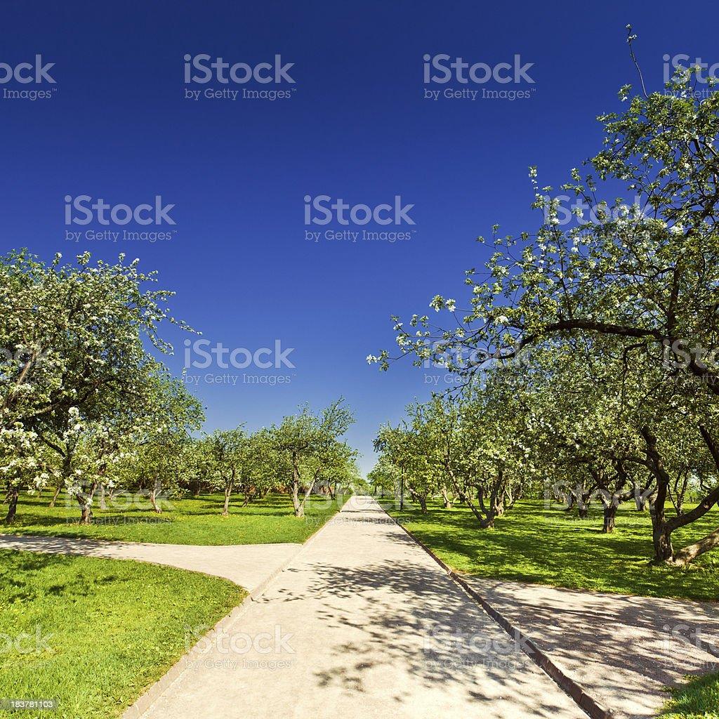 Apple trees valley royalty-free stock photo