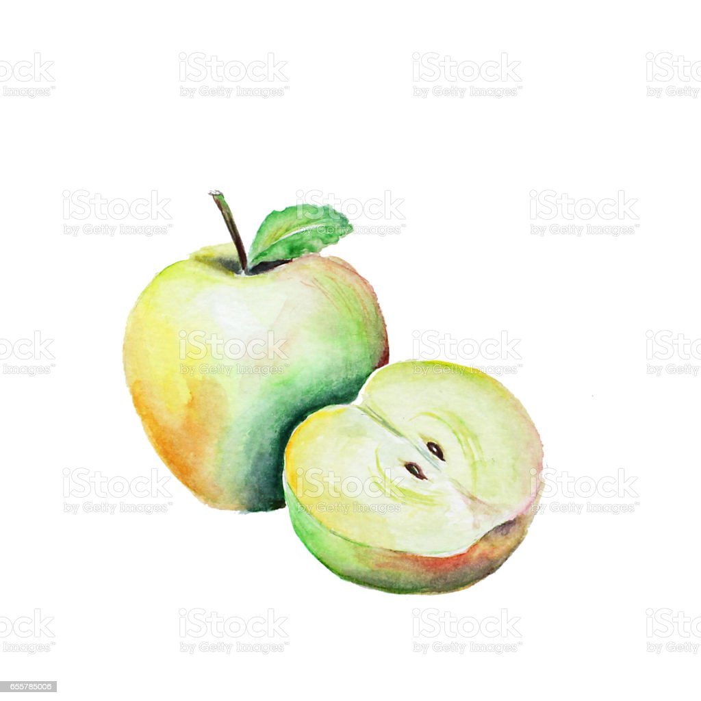 apple watercolor painted stock photo
