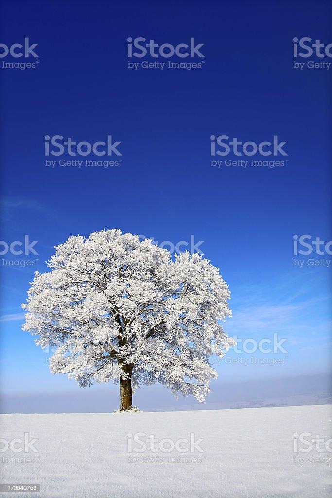 Apple Winter Tree royalty-free stock photo