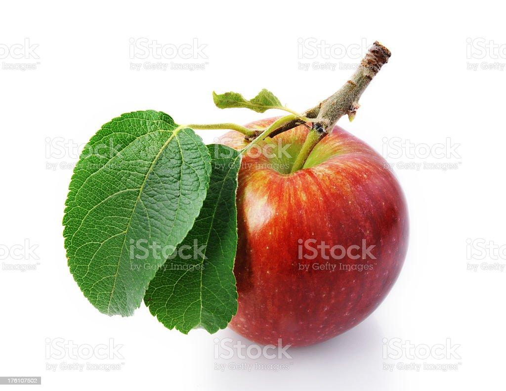Apfel mit Stielgrün und Blätter-studio shot – Foto