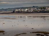 istock Appledore, Devon in winter with lapwings and ducks in the Torridge Taw estuary. 1298965488
