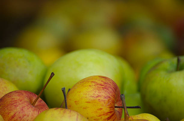 Apples fading away stock photo