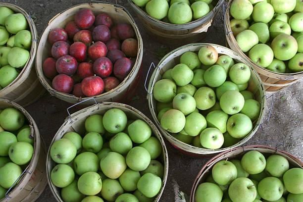Äpfel in Hülle und Fülle – Foto