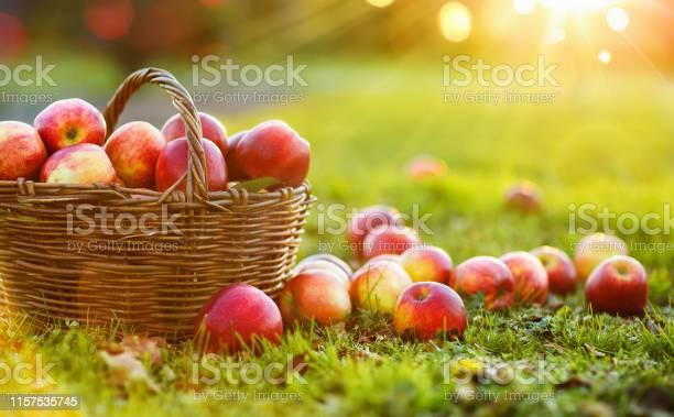 야외 바구니에 사과 가을에 대한 스톡 사진 및 기타 이미지