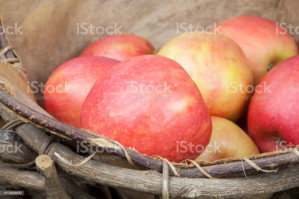 Apples in a rustic basket stock photo