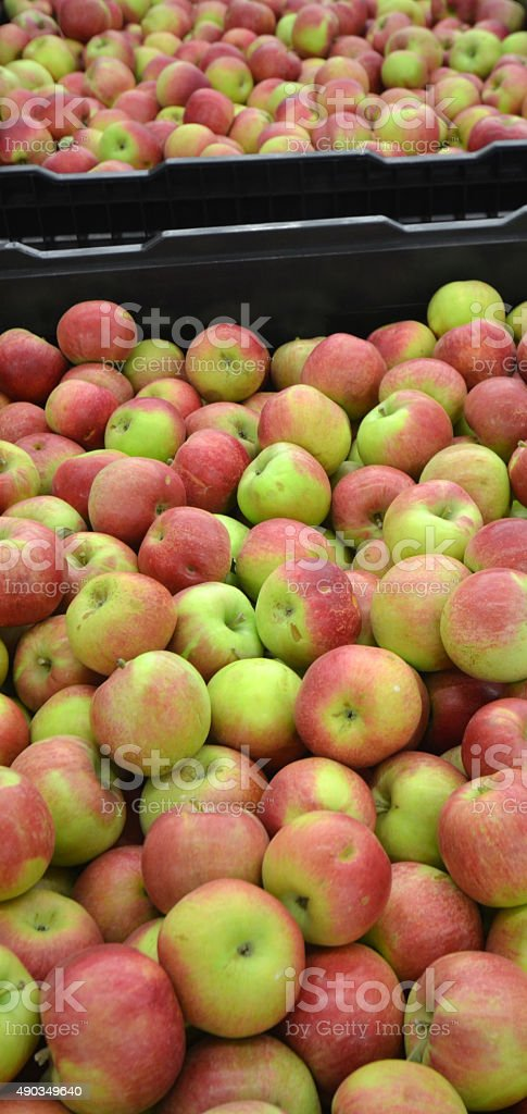 Apples in a Storage Compartment stock photo