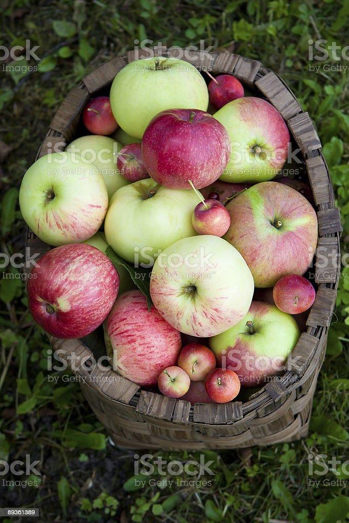 Manzanas en la cesta foto de stock libre de derechos