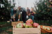 Wooden box full of apples outdoors