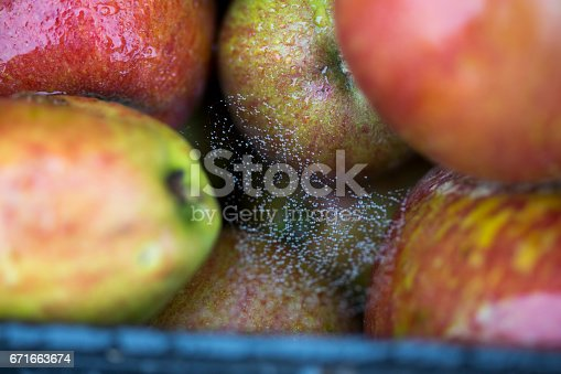 878725126 istock photo Apples in the orchard 671663674
