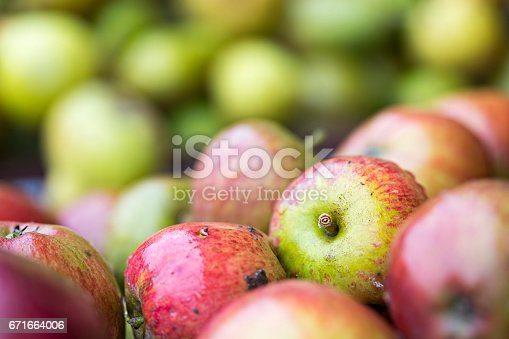 878725126 istock photo Apples in the orchard 671664006
