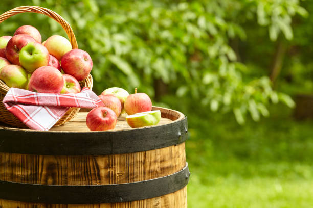 오래 된 배럴에 정원 배경에 사과 스톡 사진