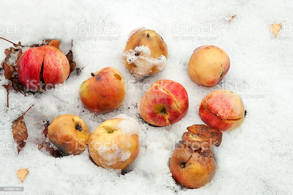 Apples on the Snow stock photo