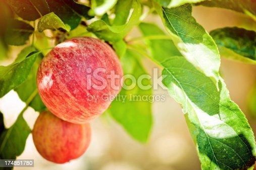 istock Apples 174851780
