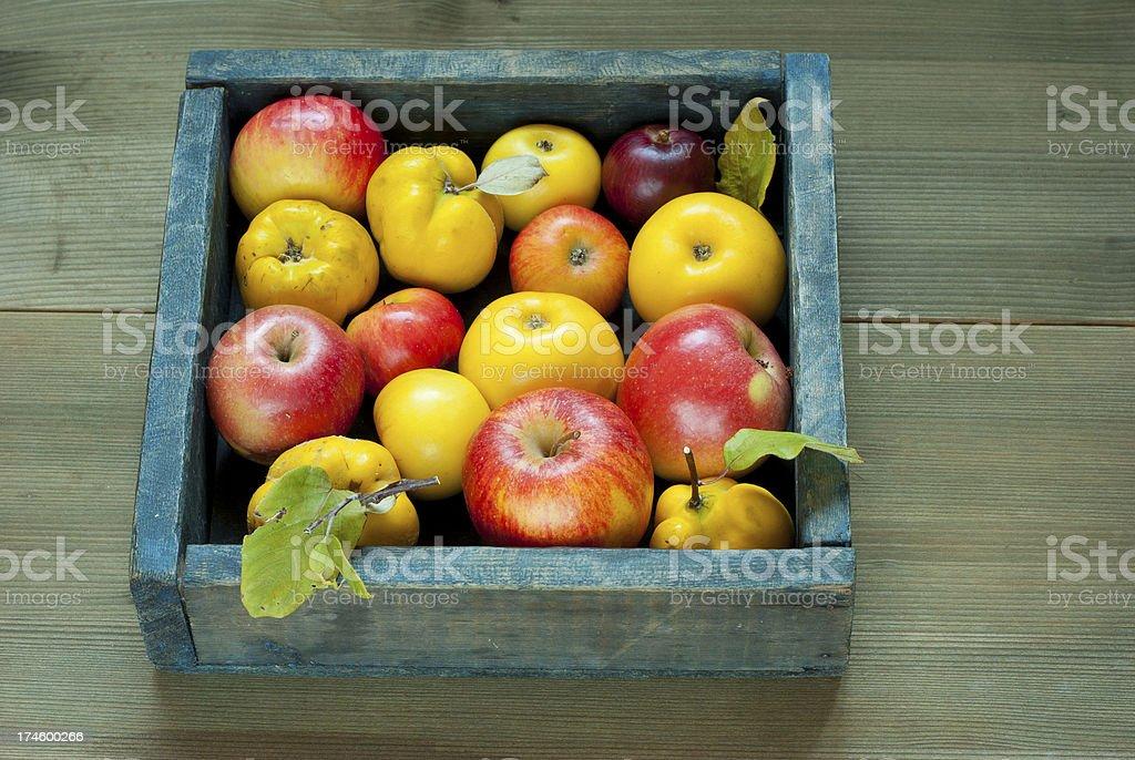 Apples, quinces stock photo