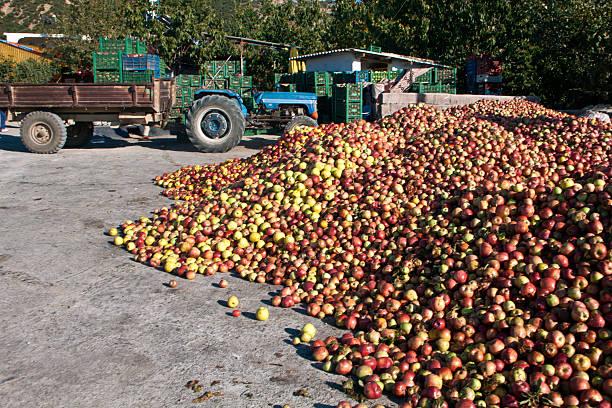 Äpfel bereit für das Beladen, Stier Mountain-region der Türkei – Foto
